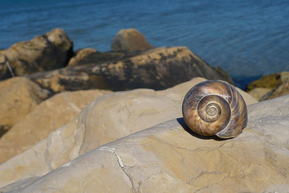 Snail, Beach, Vacations, Water, Sea, Sand Beach, Stones