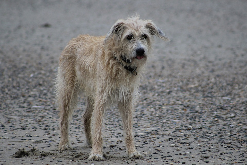 Dog, Animal, Sweet, Nature, Summer, Mammal, Beach, Cute