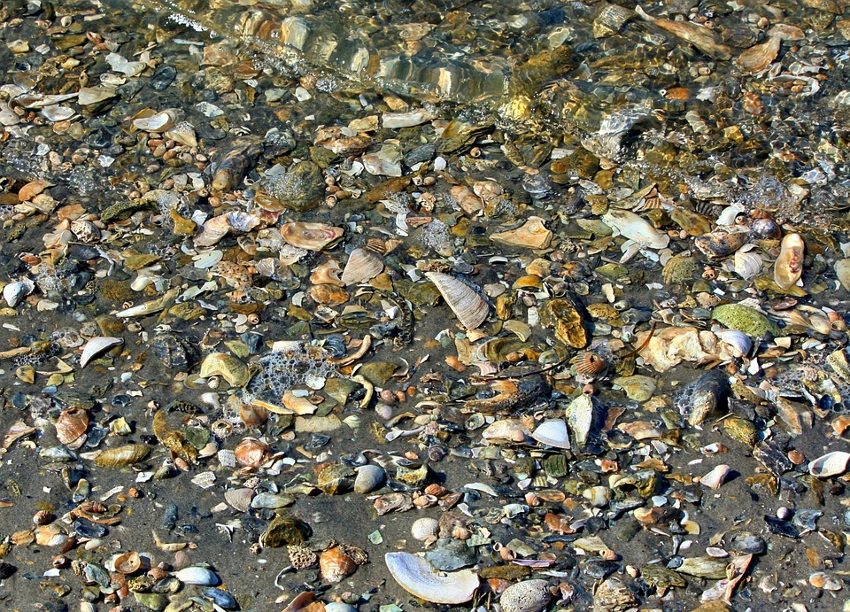 Seashells, Beach, Texture, Chesapeake Bay, Shoreline