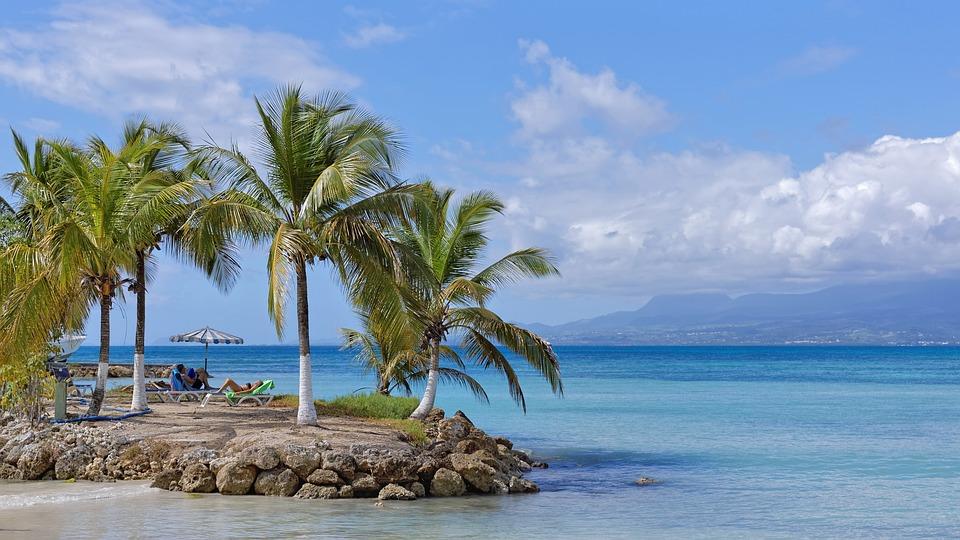 Beach, Coconut, Sea, Guadeloupe, Tropical, Caribbean