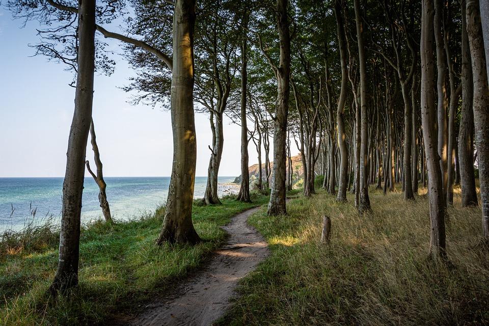 Sea, Beach, Coast, Vacations, Water, Landscape