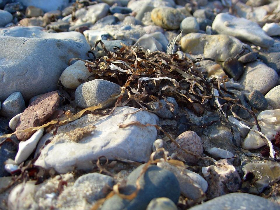 Nature, Water, Sea, Stone, Coast, Beach, Krupnyj Plan