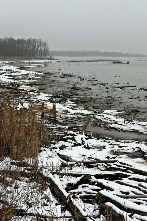 Winter, Beach, Bank, Water, Wood, Drift Wood