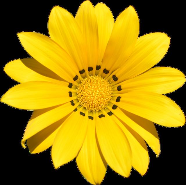 Transparent, Flower, Summer, Yellow, Beach, Holiday