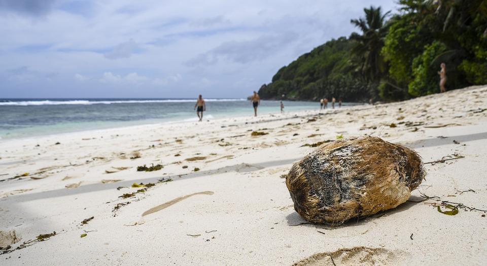 Seychelles, Beach, Beachfront, Seascape, Coconut