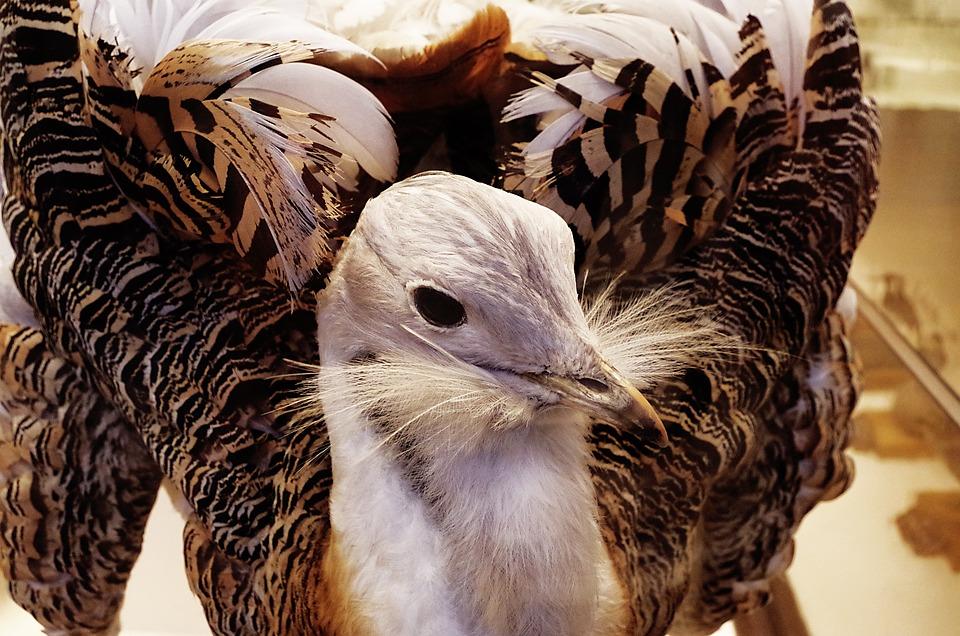 Bird, Feathers, Beak, Animal