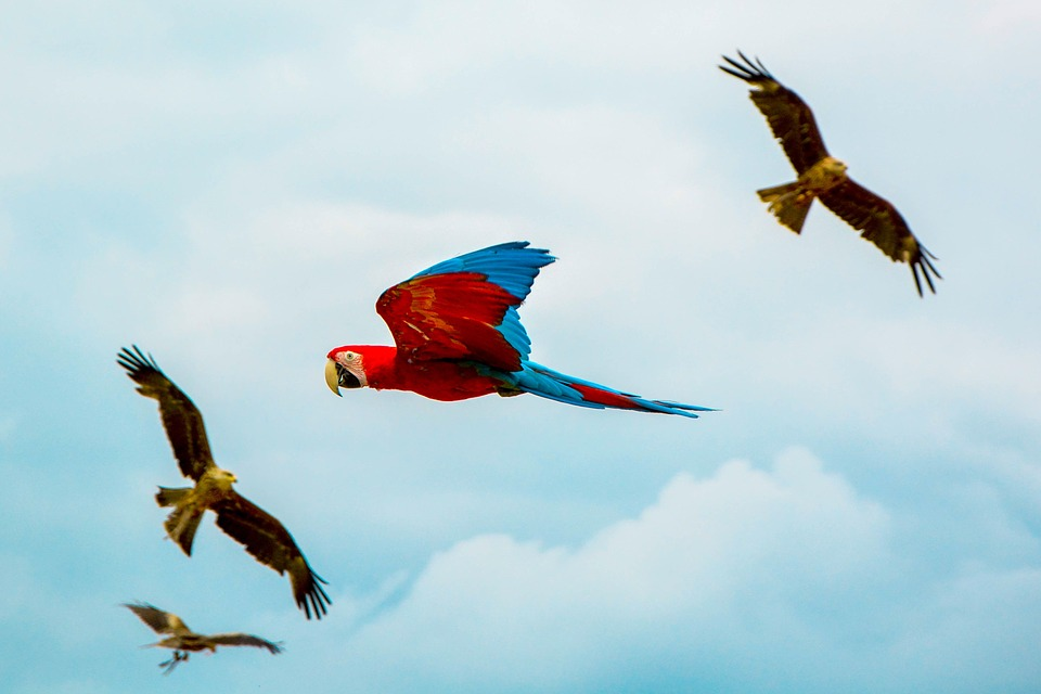 Bird, Beak, Feather, Animal, Fly, Freedom, Clouds
