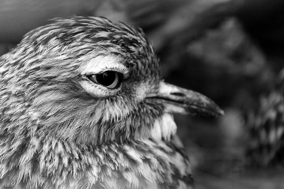 Nature, Animal, Bird, Eye, Beak, állatportré