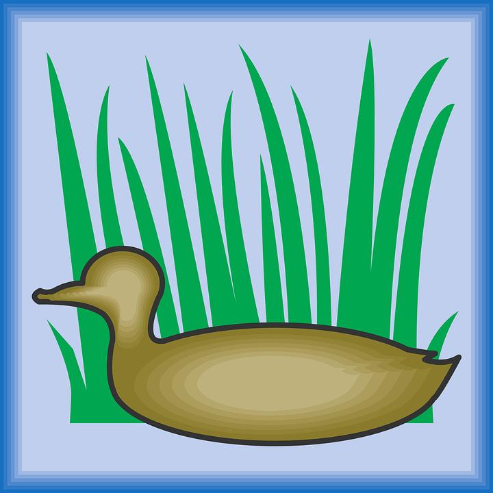 Bird, Silhouette, Grass, Wings, Duck, Beak, Feathers