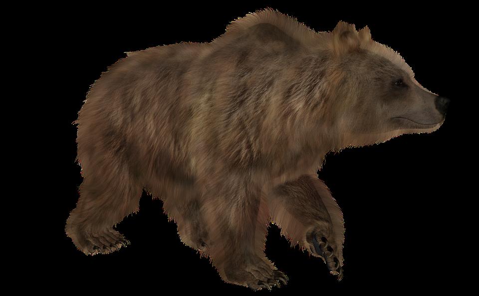 Brown Bear, Animal, Predator, Bear, Grizzly, Carnivore