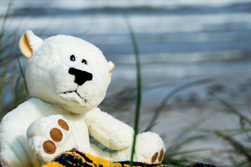 Bear, Bears, Beach, Water, Funny, White, Blue, Teddy