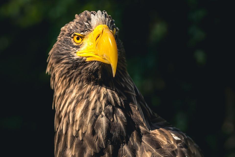 Free Photo Beautiful Animals Eagles Species Sea Birds Wild Max Pixel
