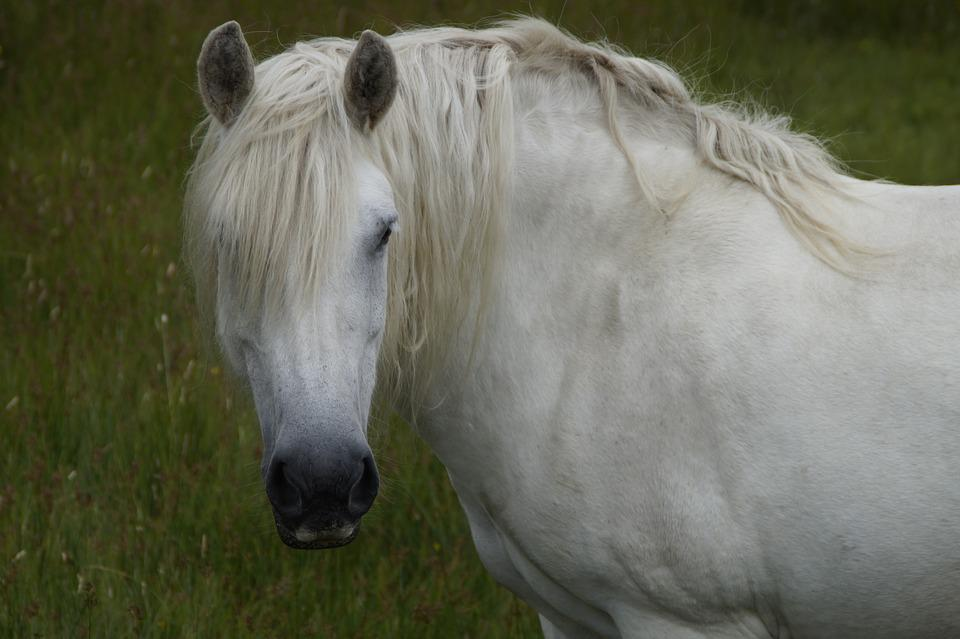 Horse, Attention, Beautiful, Mane, Aesthetic