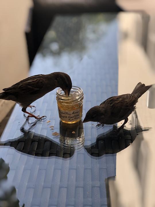 Bird, Eat, Sparrow, Animal, Beautiful, Beauty, Closeup