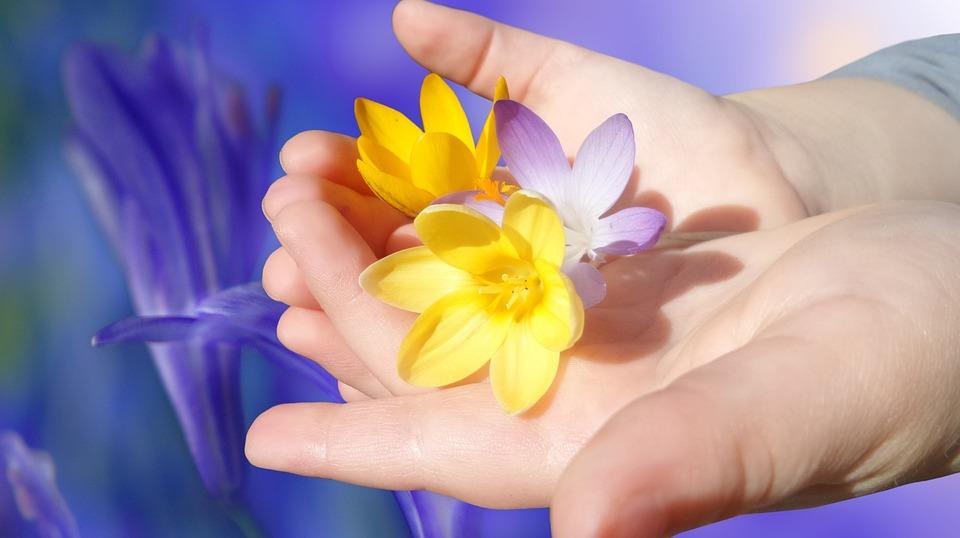 Crocus, Flower, Flowers, Bloom, Hand, Beautiful