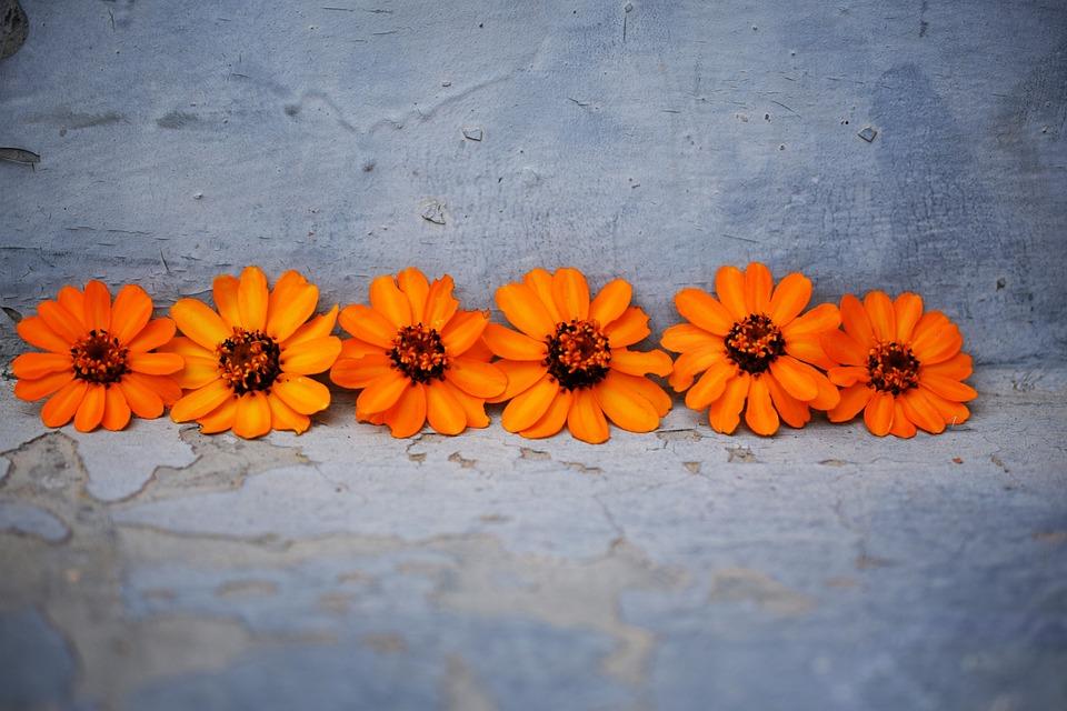 Flowers, Orange, Blue, Beautiful