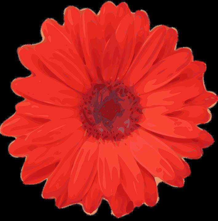 Daisy, Flower, Red, Fleur, Flora, Beautiful, Red Flower