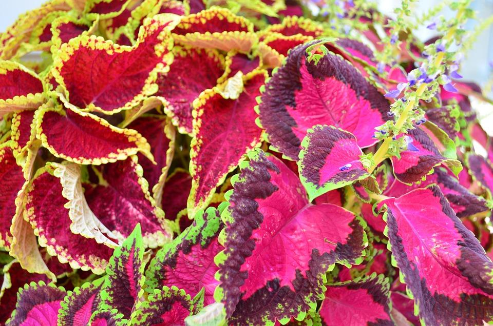 Flower, Nature, Beautiful Flower