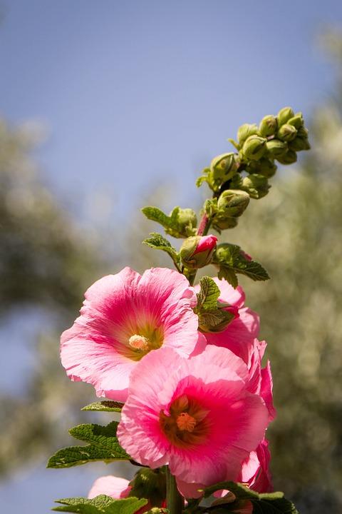 Flower, Nature, Plant, Spring, Garden, Beautiful Flower