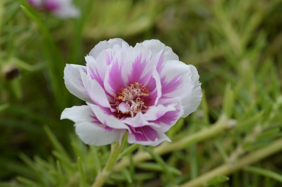 Flowers, Beautiful Flower, Small Flower, Nature