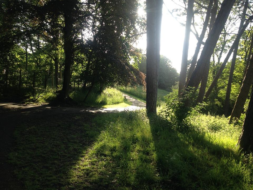 Evening, Nature, Beautiful Landscape, Footpath, Path