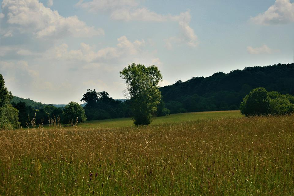 Tree, Green, Beautiful, Landscape, Natural, Summer