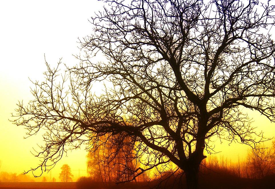 Tree, Sunrise, Light, Rays, Beautiful, Sky, Clouds