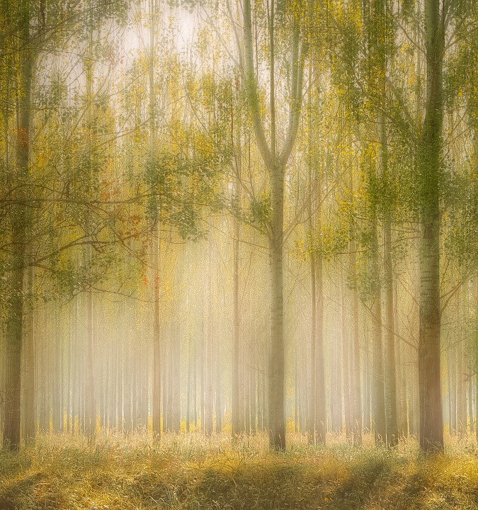 Forest, In The Woods, Trees, Tree, Nature, Beautiful