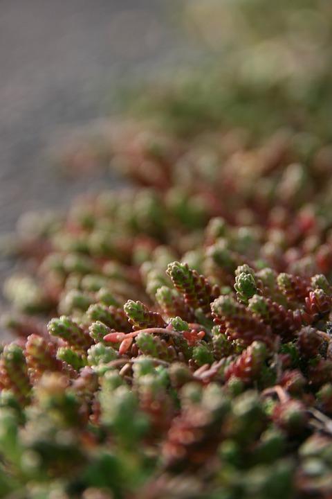 Stone Plants, Plant, Nature, Spring, Beautiful, Wildnes