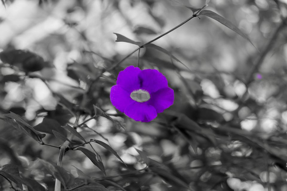 Flower, Purple, Lovely, Silent, Pure, Beautiful