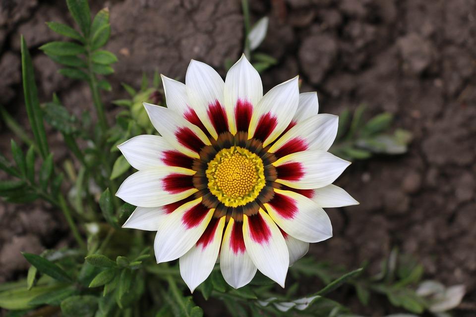 Nature, Flower, Plant, Summer, Beautiful