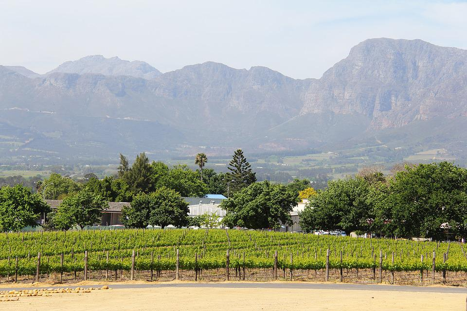 Vineyard, Vine, Breathtaking, Views, Beautiful, Amazing
