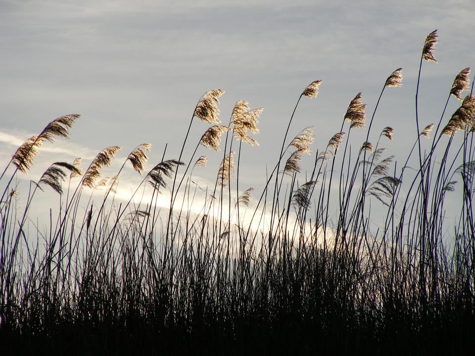 Beach Grass, Sun, Nature, Landscape, Beautiful, Beauty