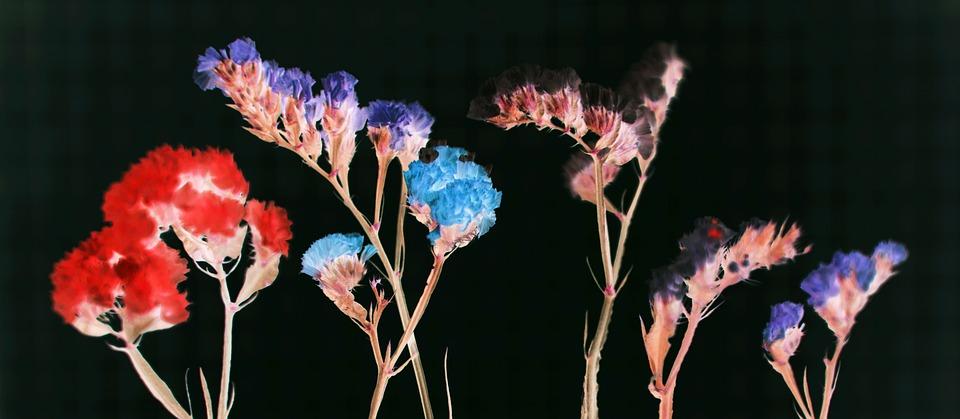 Background, Beautiful, Beauty, Black Background, Bloom
