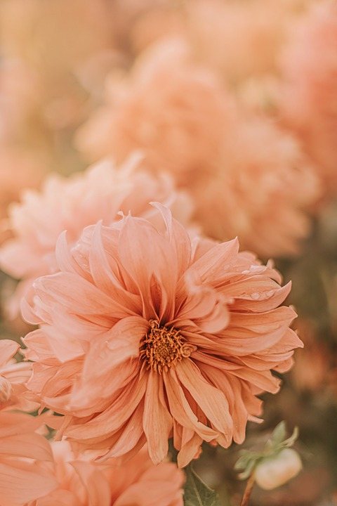 Flower, Nature, Natural, Plant, Pink, Beauty, Wedding