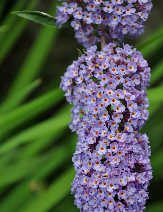 Flower, Garden, Macro, Purple, Summer, Beauty, Flowers