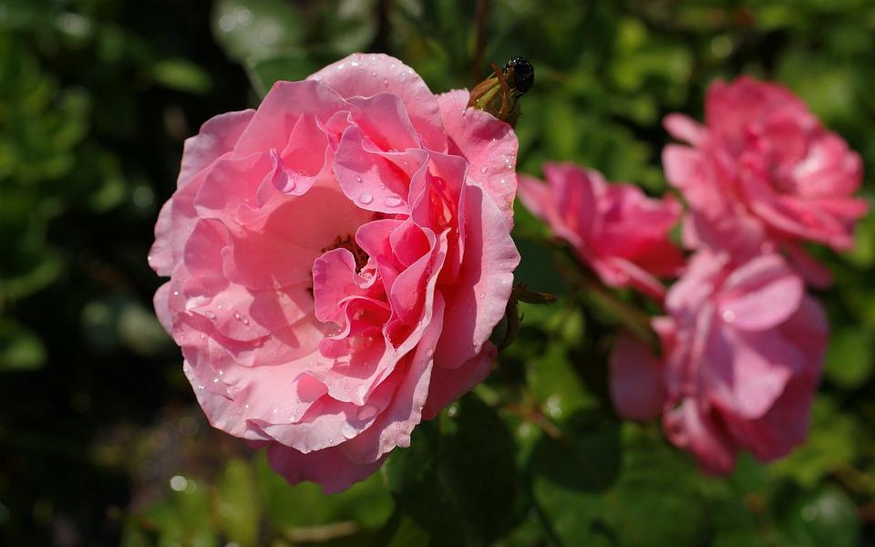 Flora, Nature, Flowers, Autumn, Beauty, Macro