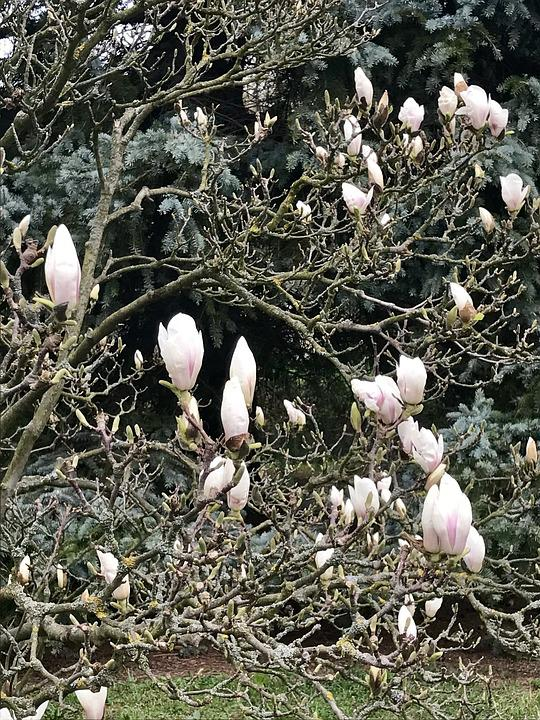 Nature, Spring, Buds, Beauty In Bloom, Bush