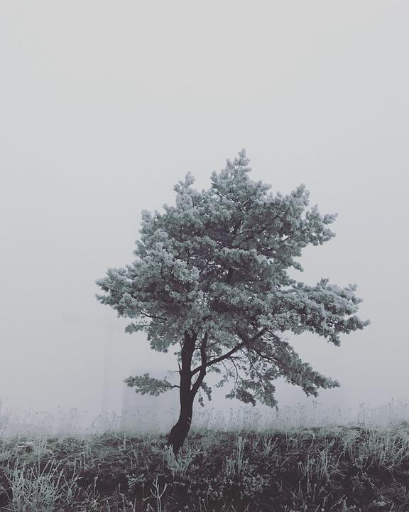 Tree, Nature, Beauty, Evening, The Fog, Lone Tree