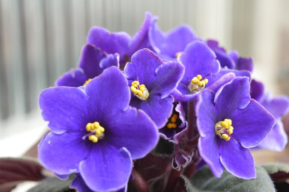 Flower, Purple, Beauty, Flowers, Purple Flower, Garden