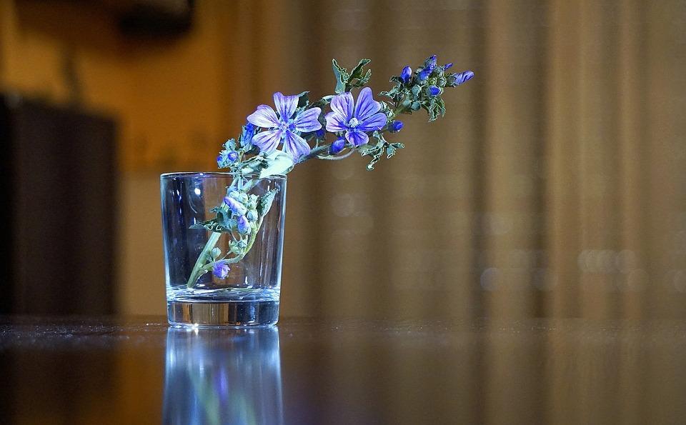 Flowers, Blue, Blue Flower, Wild Flower, Spring, Beauty