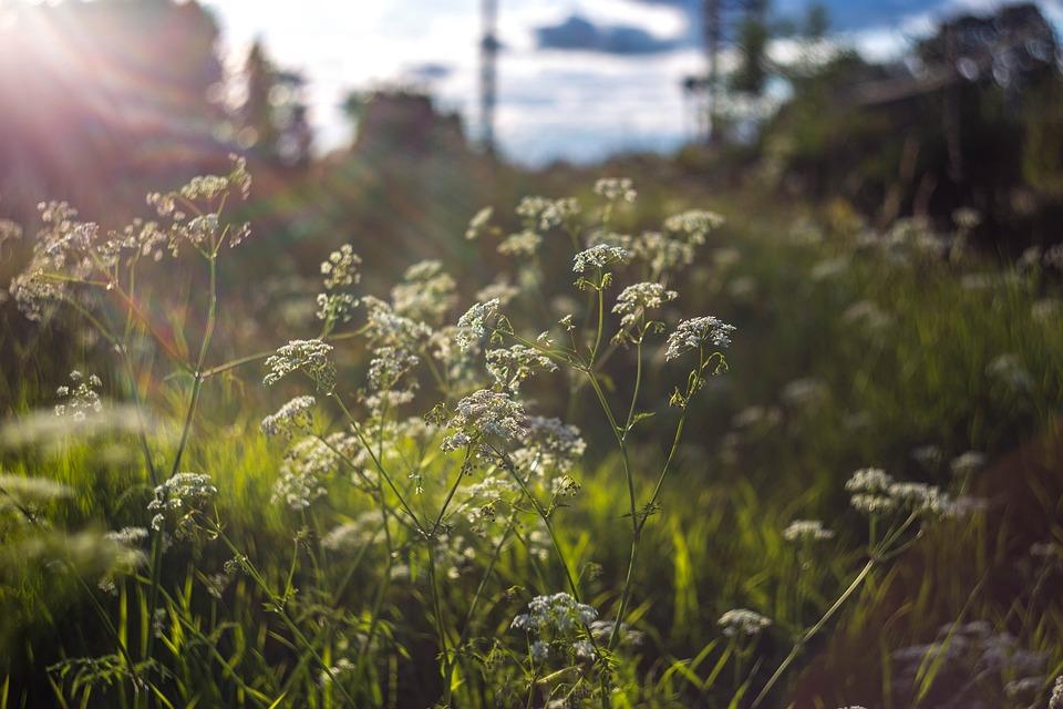 Flowers, Flowers Of The Field, Bouquet, Summer, Beauty