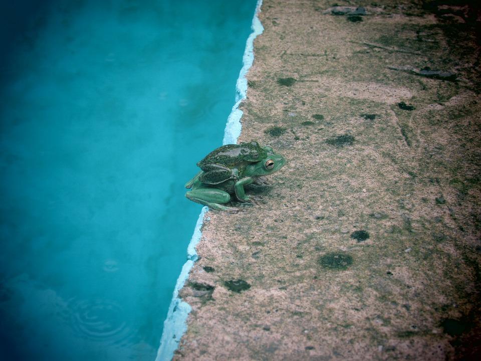 Frog, Mother, Bebe7