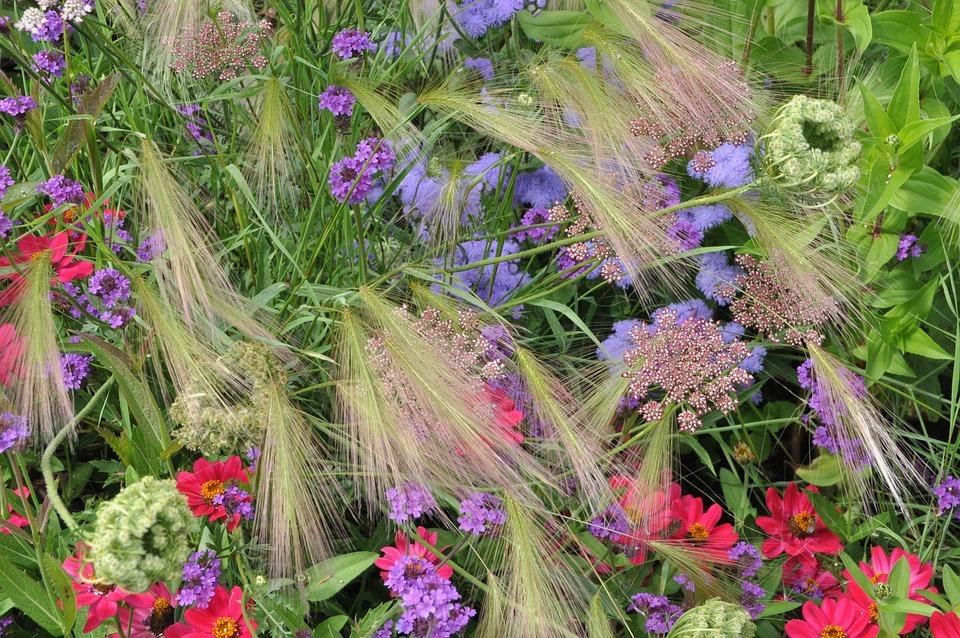 Bed, Flowers, Cottage Garden, Bloom, Nature, Garden