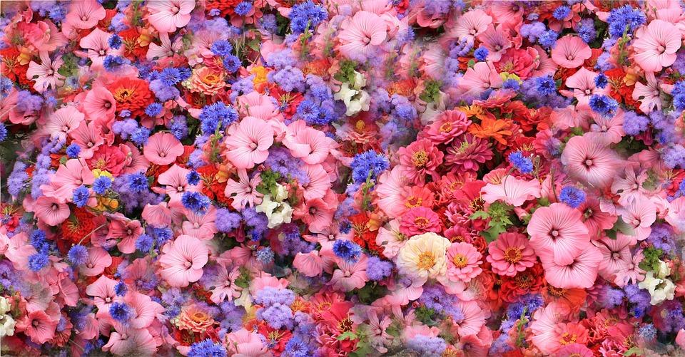 Flowers, Spring, Park, Bed, Pansy, Violet, Viola