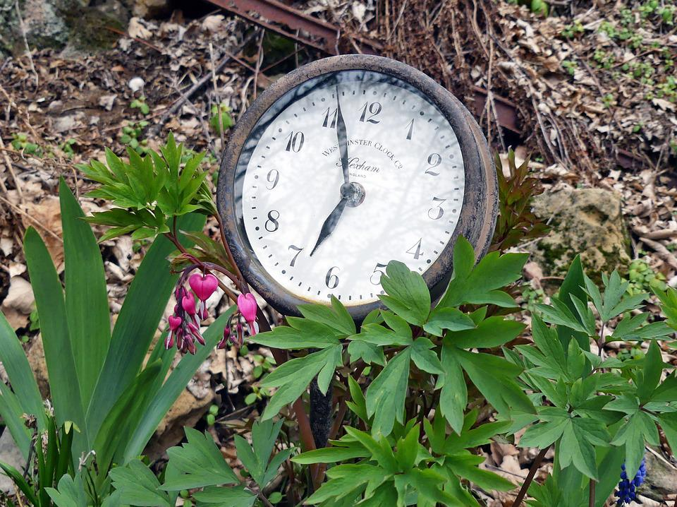 Garden Watch, Old, Antique, Bed, Spring, Green, Retro