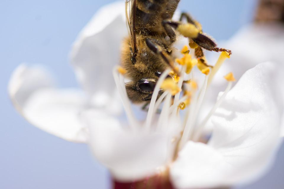 Nature, Insect, Flower, Bee, Biology, Summer, Pollen