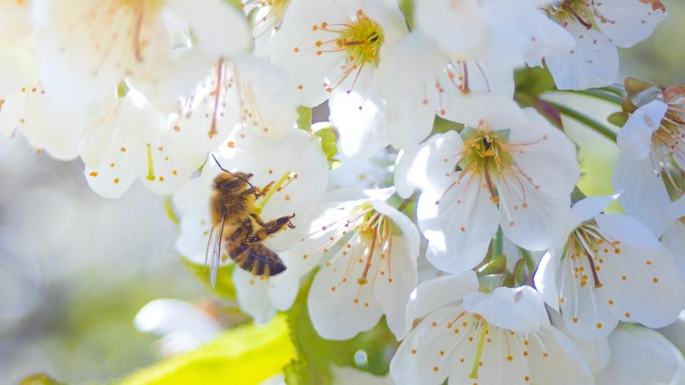 Bee, Flower, Blossom, Bloom, Macro, Close, Plant