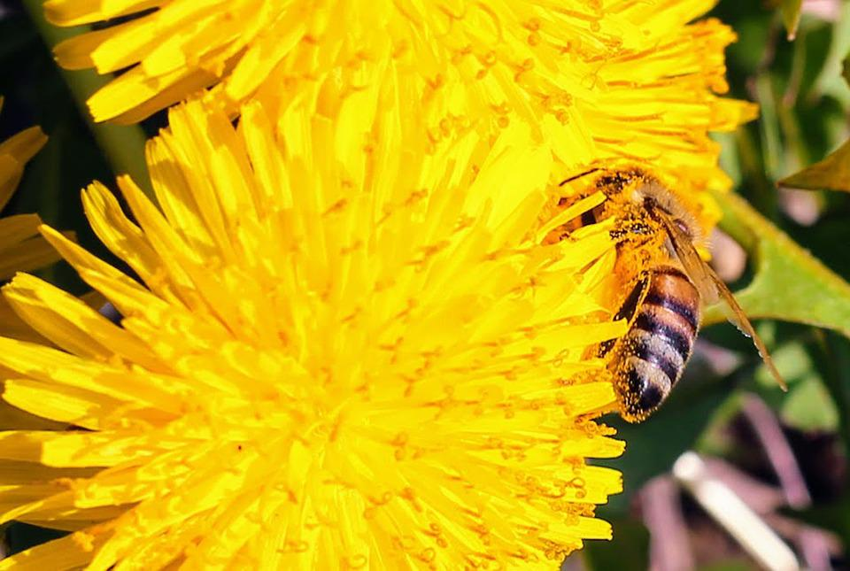 Nature, Flower, Bee, Insect, Summer