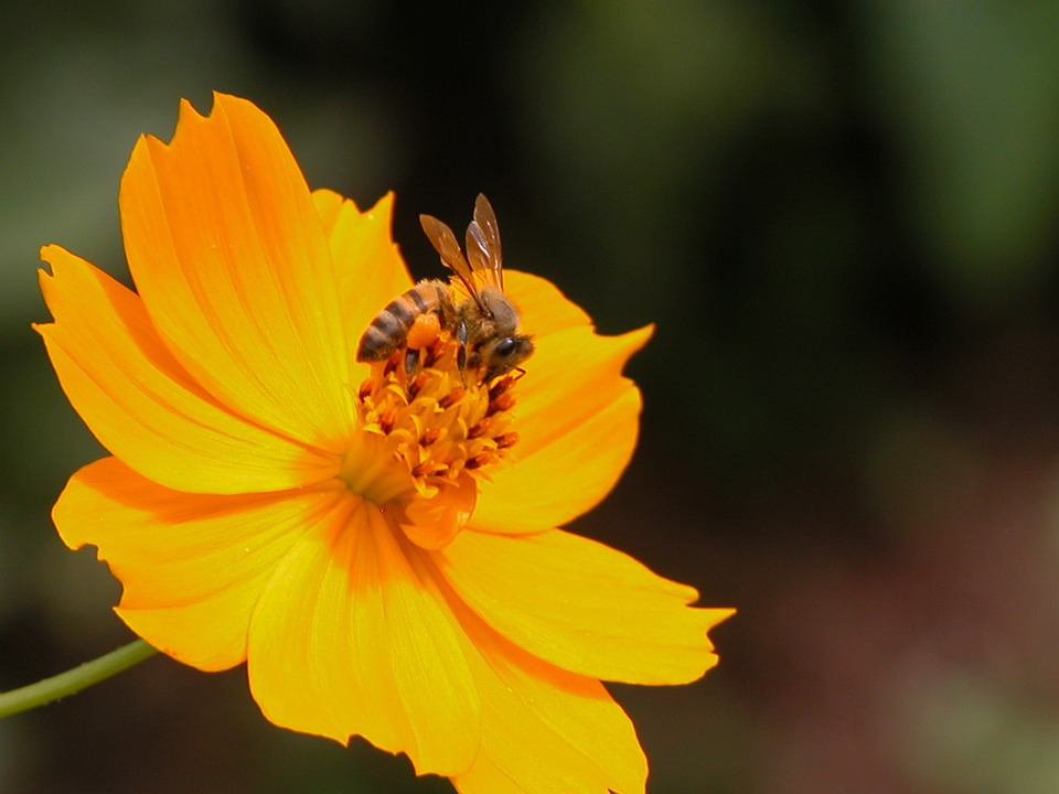Flower, Bee, Orange